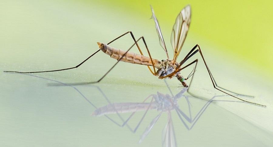 מדביר יתושים בדרום